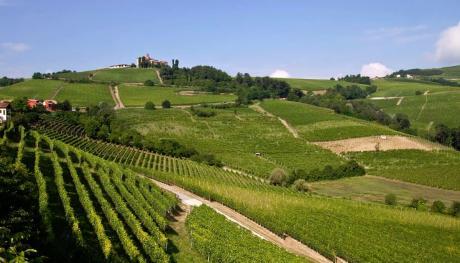 Tour enogastronomico sulle strade del vino in camper a noleggio Camper2Go